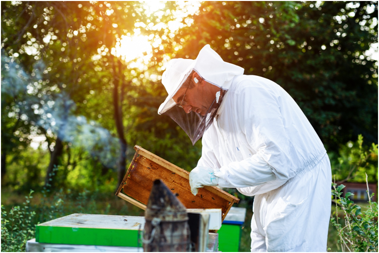 Why can Aotearoa honey Limited provide high concentration UMF Manuka honey
